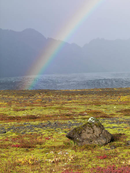 Ecosystem Photograph - Rainbow Over Tundra With Wild Flowers by Tom Norring