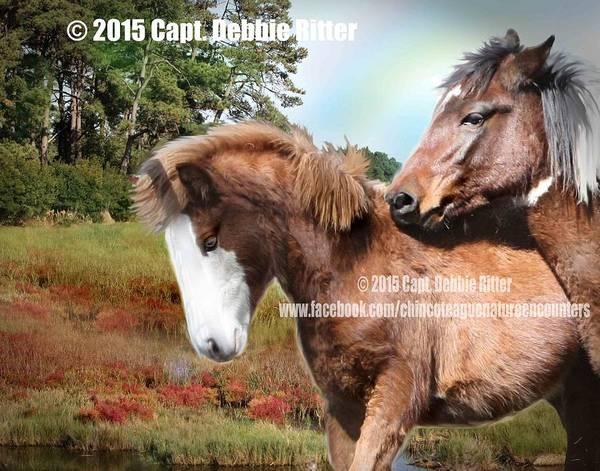 Photograph - Rainbow Pony by Captain Debbie Ritter