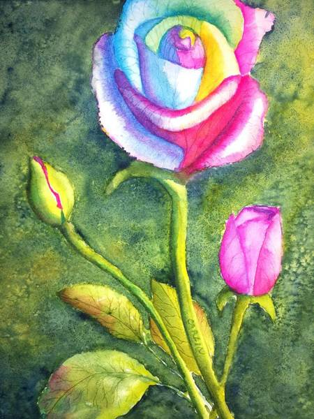 Painting - Rainbow Rose And Buds by Carlin Blahnik CarlinArtWatercolor