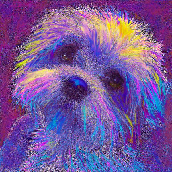 Wall Art - Digital Art - Rainbow Shih Tzu by Jane Schnetlage