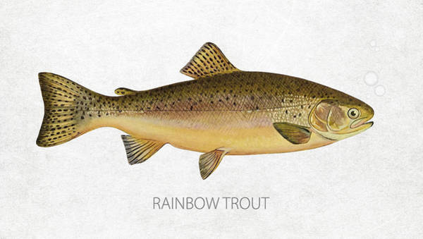 Wall Art - Digital Art - Rainbow Trout by Aged Pixel