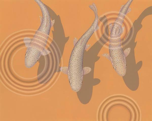 Wall Art - Painting - Rainbow Trout by Nathan Marcy