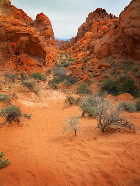 Photograph - Rainbow Vista Trail Valley Of Fire by Frank Wilson