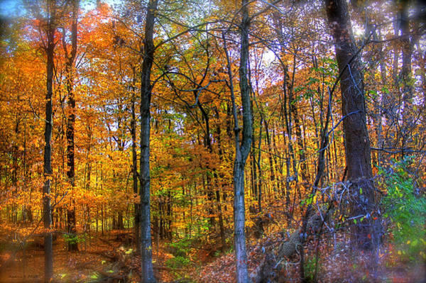 Photograph - Rainbow Woods by Andrea Platt