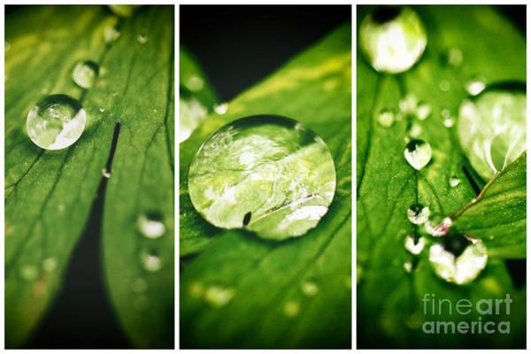 Photograph - Raindrop Panels by John Rizzuto