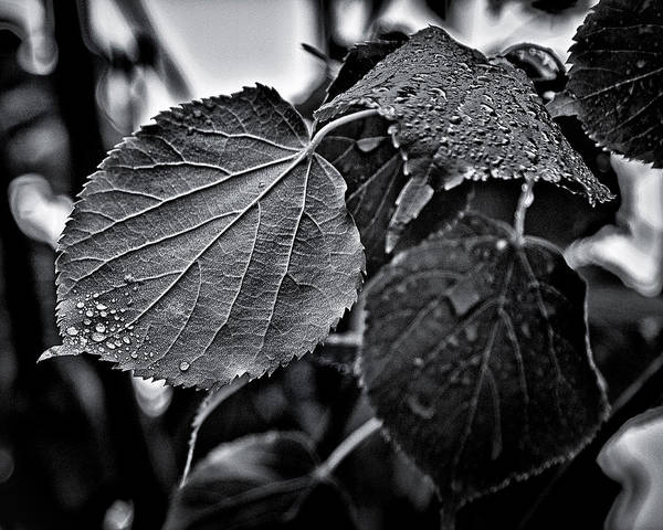 Photograph - Raindrops After The Storm by Brian Carson