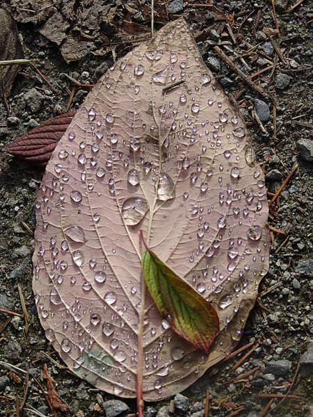 Blades Mixed Media - Raindrops On A Leaf by Janet Ashworth