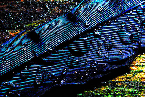 Photograph - Raindrops On Feather by Thomas R Fletcher