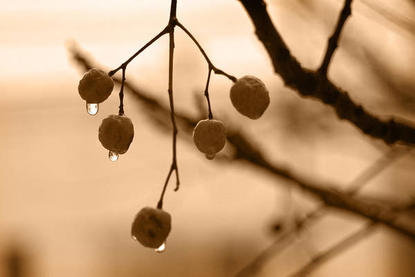 Gota Photograph - Raindrops by Be U