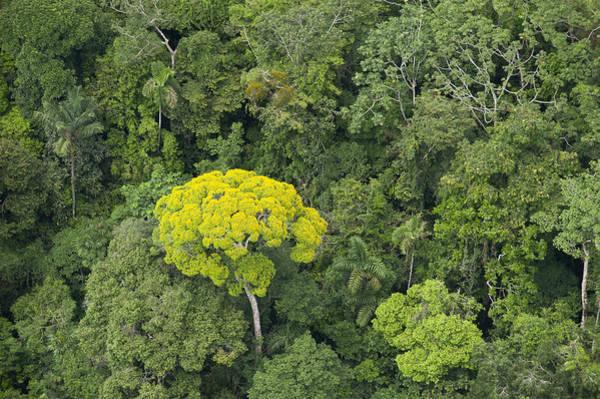 Photograph - Rainforest Canopy Yasuni Ecuador by Pete  Oxford