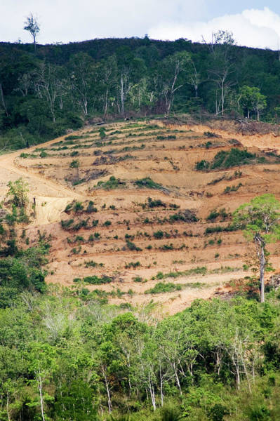Eco-system Photograph - Rainforest Deforestation by Matthew Oldfield/science Photo Library