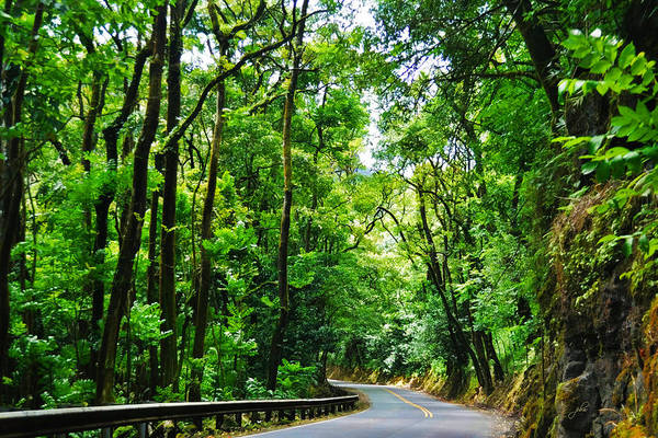 Photograph - Rainforest Drive - Hana Highway by Paulette B Wright
