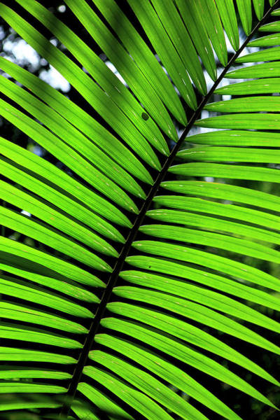 Far North Queensland Wall Art - Photograph - Rainforest Leaves Form Abstract by Paul Dymond