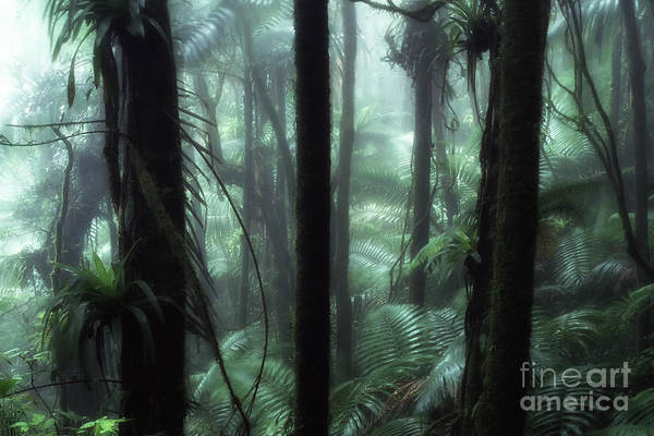 Photograph - Rainforest Mist by Thomas R Fletcher