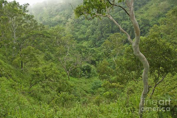 Photograph - Rainforest On Mount Manucoco by Dan Suzio