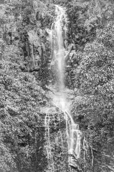 Photograph - Rainforest Waters by Colleen Coccia