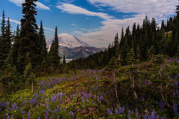 Mount Rainier Photograph - Rainier Tipsoo Wildflowers by Mike Reid