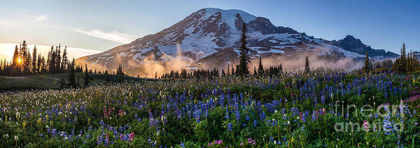 Mount Rainier Photograph - Rainier Wildflower Meadows Pano by Mike Reid