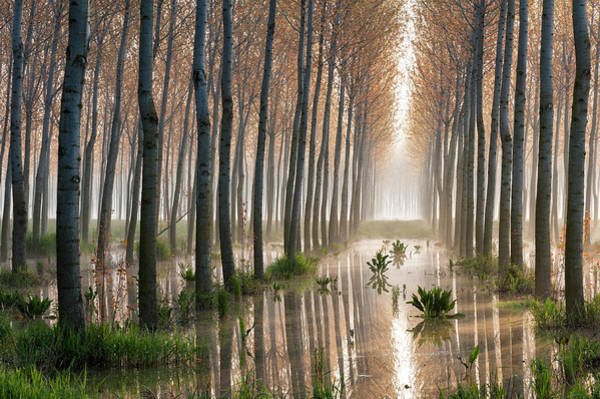 Trunks Photograph - Rains Of Spring by Raffaele Spettoli