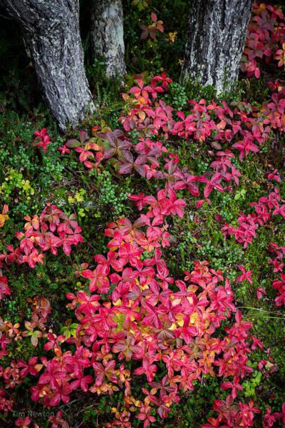 Photograph - Rainy Autumn Forest by Tim Newton