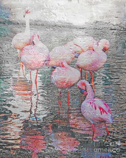 Photograph - Rainy Day Flamingos by Lizi Beard-Ward