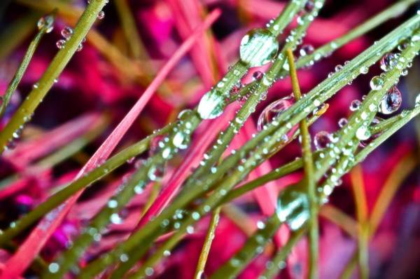 Photograph - Raindrops by Marianna Mills