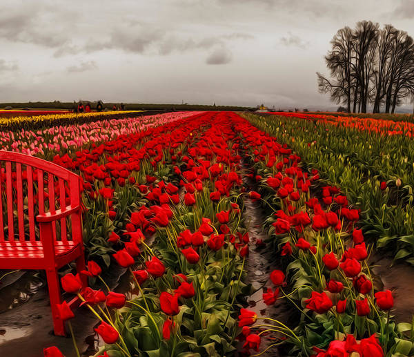 Wall Art - Photograph - Rainy Day Tulips by Nancy Marie Ricketts