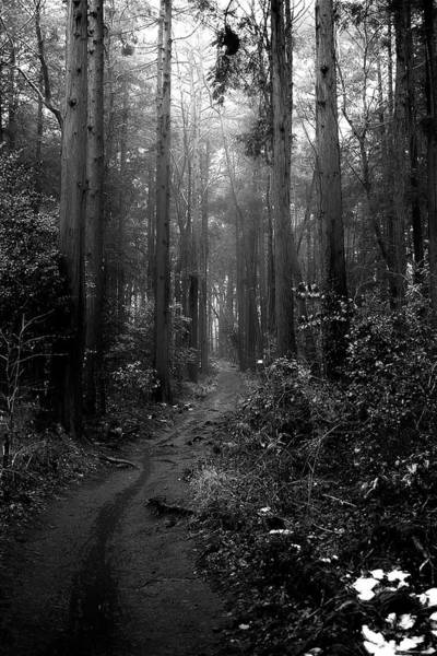 Nara Wall Art - Photograph - Rainy Forest by By U2penguin