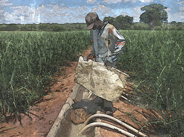 Photograph - Raising Cane by Al Harden