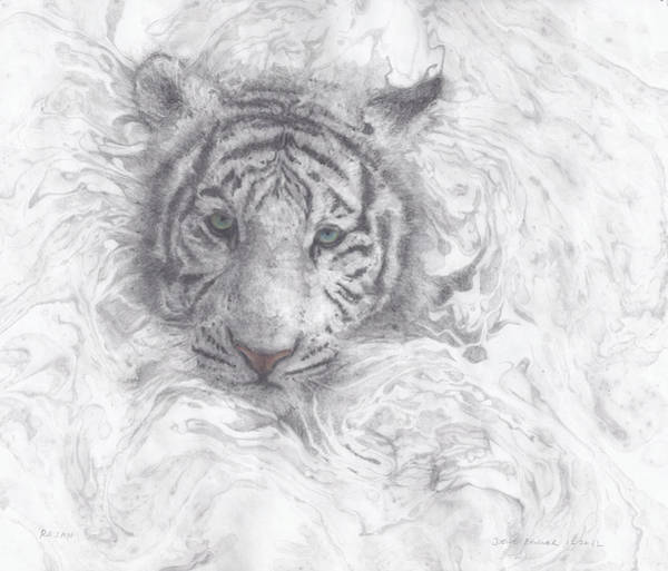 Options Drawing - Rajah by Joelle Bhullar