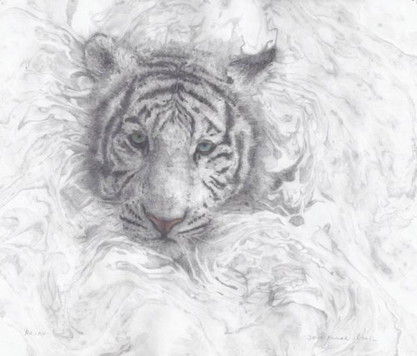 Bengal Tiger Drawing - Rajah by Joelle Bhullar