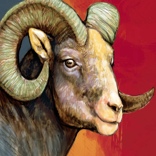 Ungulate Wall Art - Drawing - Ram - Sheep Stylised Drawing Art Poster by Kim Wang