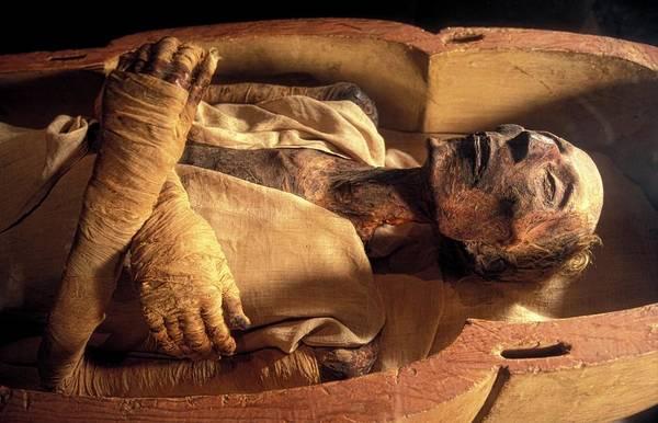 Wall Art - Photograph - Ramases II Mummy by Patrick Landmann/science Photo Library