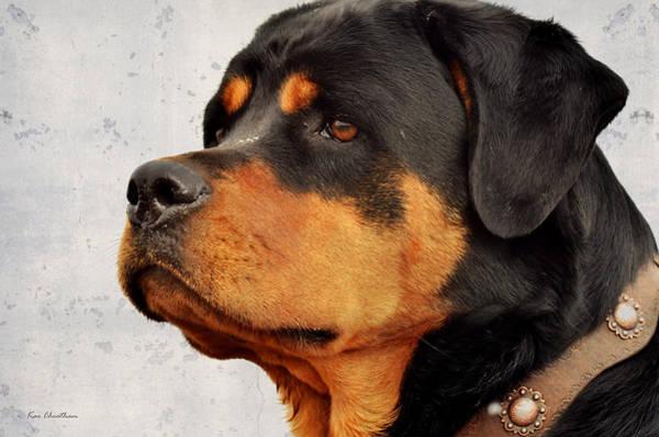 Canine Mixed Media - Ranch Dog On Watch by Kae Cheatham