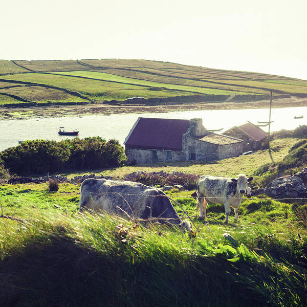 Ranch Photograph - Ranch In Ireland by Moreiso
