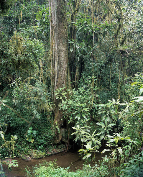 Madagascar Photograph - Ranomafana Reserve by Sinclair Stammers/science Photo Library