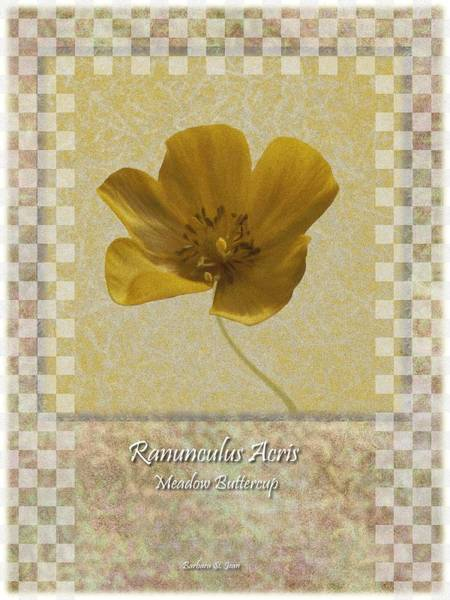 Digital Art - Ranunculus Buttercup Wild Flower Poster 3 by Barbara St Jean
