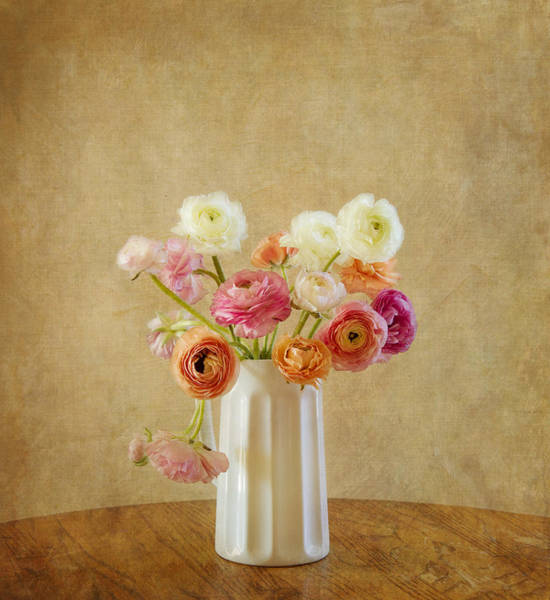 Photograph - Ranunculus Flower Still Life by Kim Hojnacki