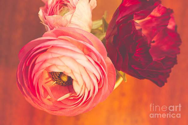 Wall Art - Photograph - Ranunculus Love I by Mary  Smyth