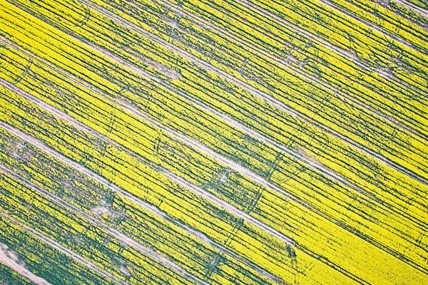 Wall Art - Photograph - Rapeseed Field by Tom Gowanlock