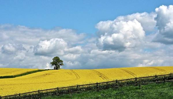 Nottinghamshire Photograph - Rapeseed Fields by Flick's Pix