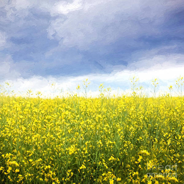 Photograph - Canola Fields With Storm Clouds/ Digital Painting by Sandra Cunningham