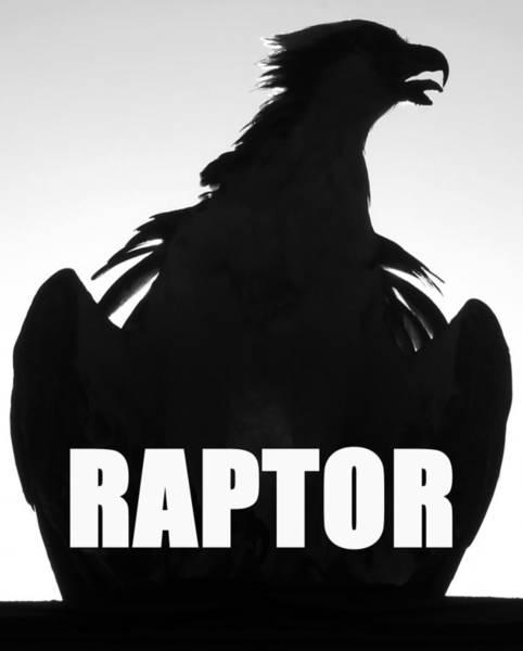 Squawk Photograph - Raptor Spc Work A by David Lee Thompson