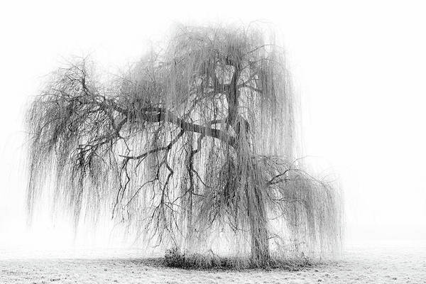 Weeping Willow Wall Art - Photograph - Rapunzel by Stefanehlers.com