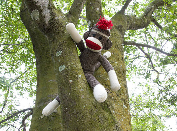 Sock Monkey Photograph - Rare Monkey Caught In The Wild by William Patrick