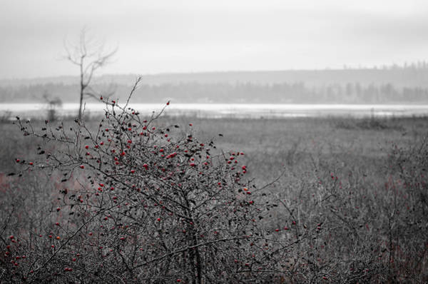 Photograph - Rathtrevor Rose Hip Red by Roxy Hurtubise