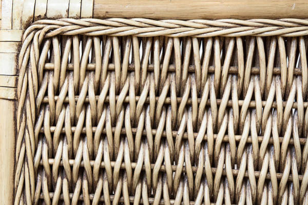Weaving Photograph - Rattan  by Tom Gowanlock