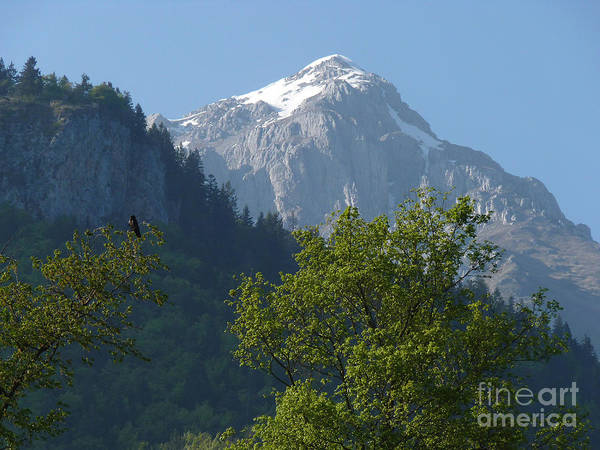 Photograph - Raven And Mountain by Phil Banks