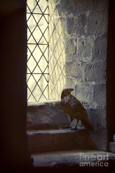 Wall Art - Photograph - Raven By Window by Jill Battaglia