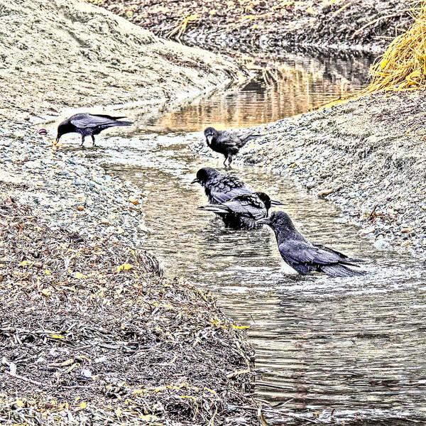 Photograph - Raven Gathering Art by Roxy Hurtubise